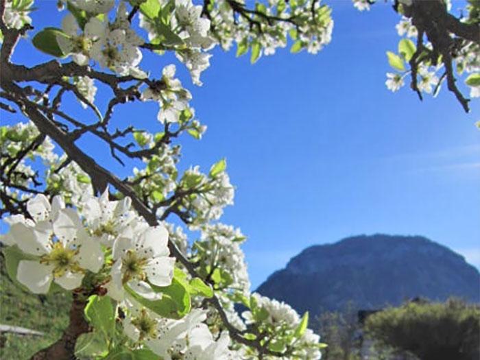 The Mother Divine Programme, Seelisberg, Switzerland